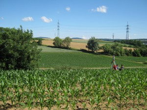 Capturing a second data set of the maize field for analyzing plant growth.