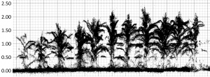 Side view on the maize field point clouds captured with a low-cost 3D camera.