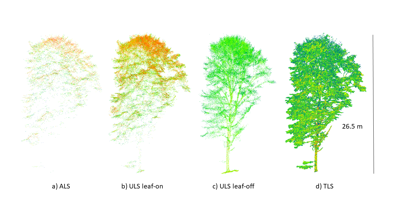 Point clouds of a European Beech, coloured by reflectance. a) ALS point cloud acquired under leaf-on conditions, b) ULS point cloud acquired under leaf-on conditions, c) ULS point cloud acquired under leaf-off condition, d) TLS point cloud acquired under leaf-on conditions. ALS = Airborne laser scanning, ULS = UAV-borne laser scanning, TLS = Terrestrial laser scanning.